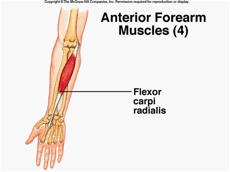 joint pain in the forearm picture 5