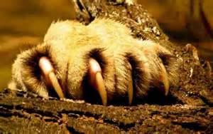 cat pictures showing claws and teeth picture 11