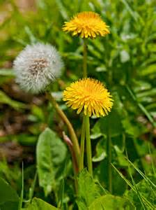 weeds picture 2
