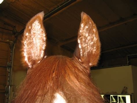 flaky skin on horses picture 17