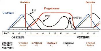 hgh hormone levels pregnancy picture 6