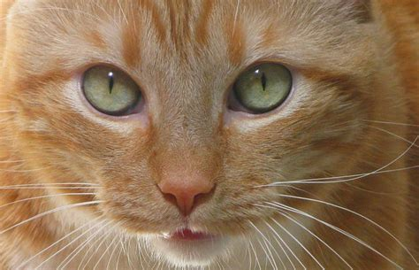 cat herpes picture 17