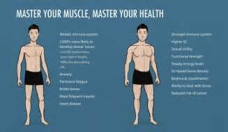 how much of body weight is muscle picture 3