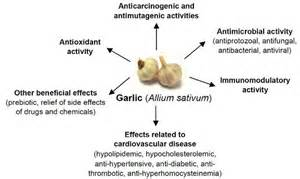 Garlic for lowering cholesterol picture 6
