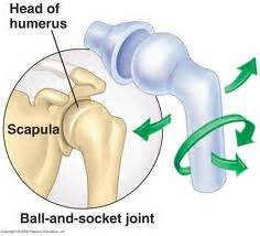 ball and socket joint parts picture 13