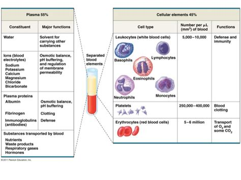 Physiology blood picture 1