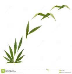 herbal dreams cigarette picture 19