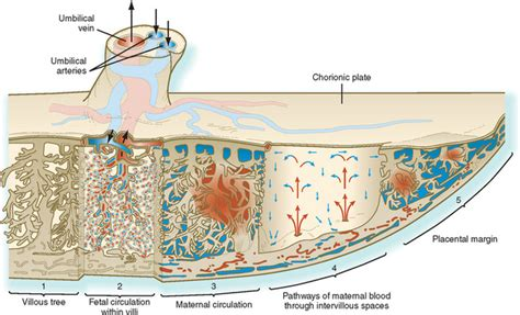 causes of decreased placental blood flow picture 14