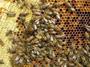 bee hives pictures picture 5