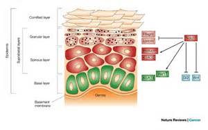 function of keratin picture 9