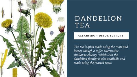 dandelion tea picture 7