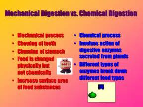 diagrams of chemical digestion picture 6