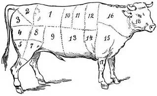 cattle aging picture 9