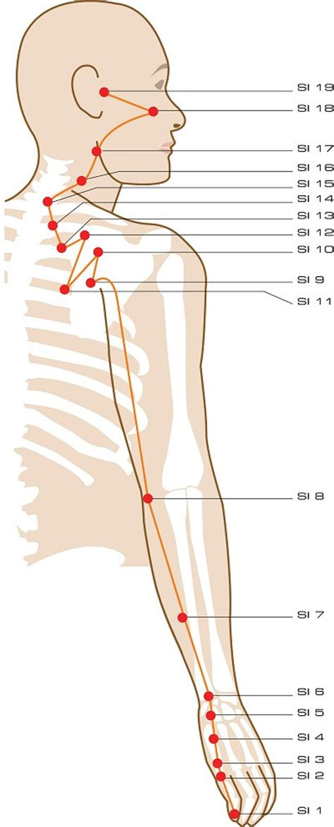 sacroiliac joint pressure points chart picture 5