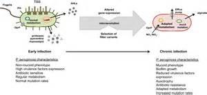 pseudomonas bacterial pathogen picture 6