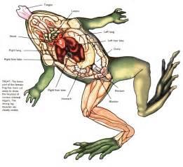 diagram of penis in vagina picture 1