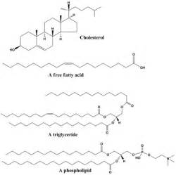 What is the two cholesterol picture 18