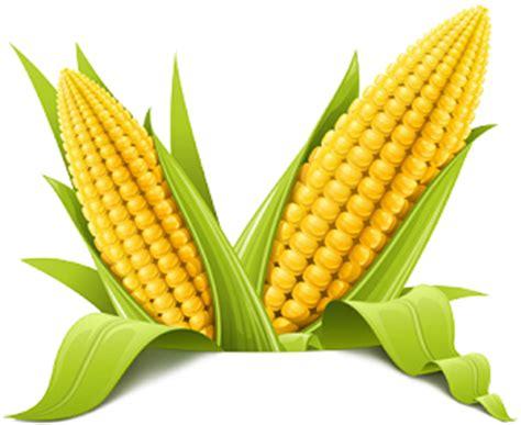 corn starch headache picture 13