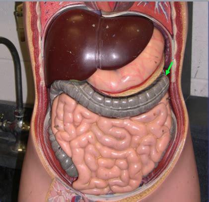 where is the colon located in the intestine picture 8