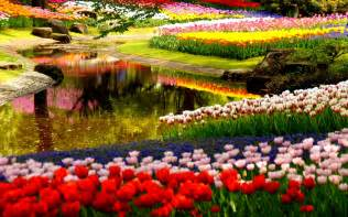 garden picture 2