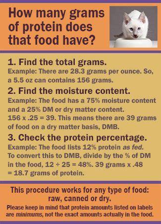 geriatric cat diet picture 9