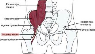 iliopsoas muscle picture 15