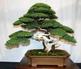where to buy the life tree purify picture 4