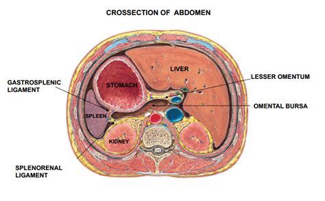 where is the colon located in the intestine picture 12