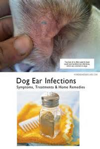 dog and home remedy for microbial infection picture 1