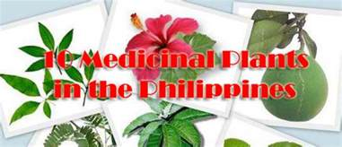 philippine herbal medicine for cholesterol picture 5