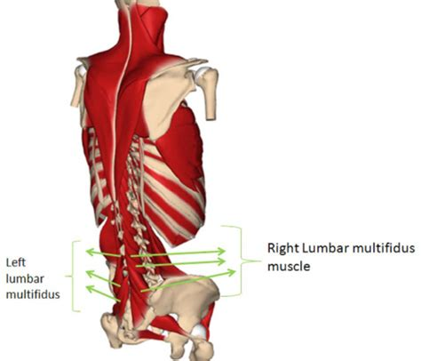 for pelvic muscle spasm picture 3