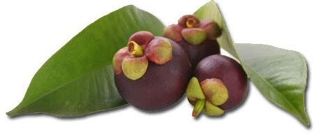 which stores sell natural garcinia picture 12