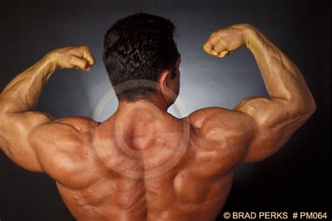 free muscle pictures picture 18