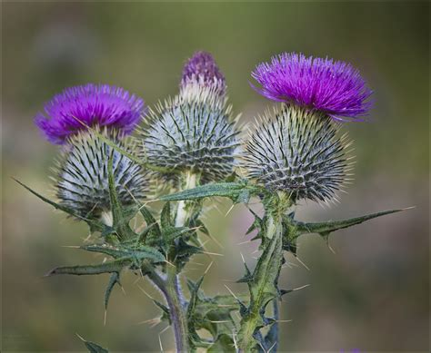thistle b & b picture 2