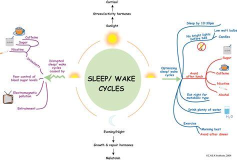 sleep wake cycle picture 3
