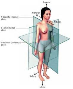 how body is positioned for thyroidectomy picture 10