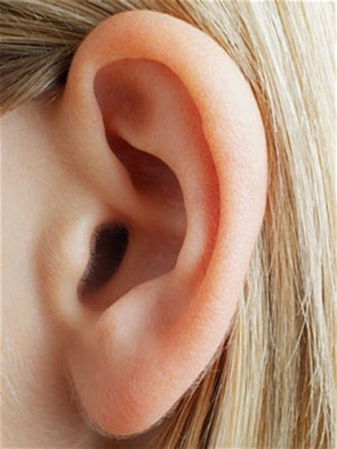 locations of weight loss ear staple picture 6