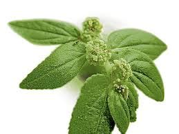healing galing herbs picture 1