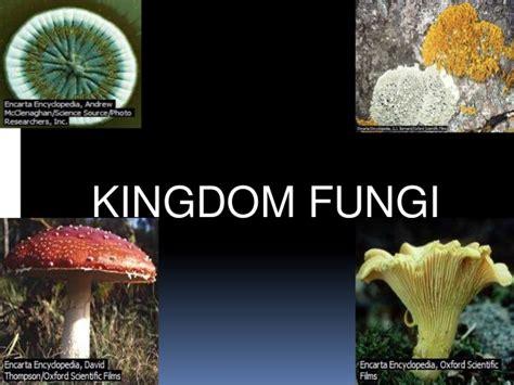 fungi kingdom picture 10