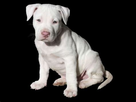 hypothyroidism and dogs picture 9