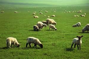 alfalfa prices picture 18