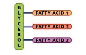 Cholesterol triglcerides picture 5