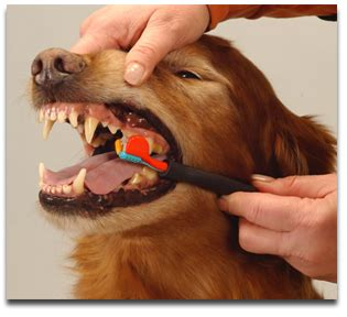 alternative dog teeth cleaning picture 7