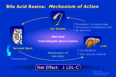 Cholesterol ldl lower picture 7