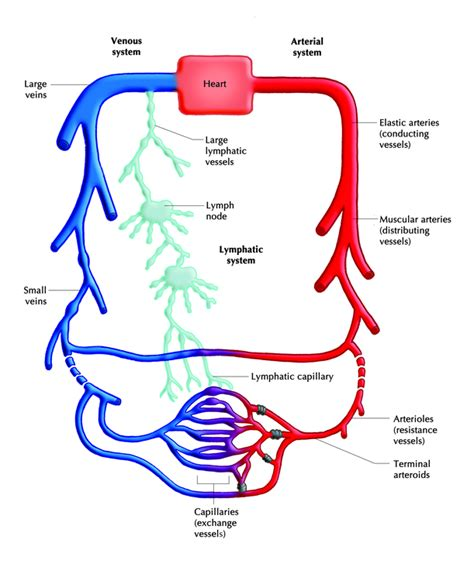 can i buy circu aid for blood circulation picture 6