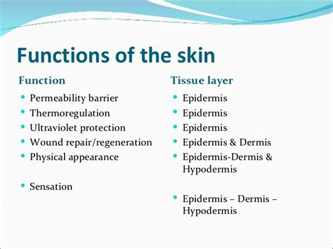 functions of the skin picture 5