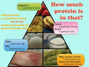 high protein diet and weight loss picture 3