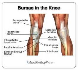 muscles around the knee joint picture 13