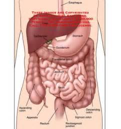 ducodendum stomach colon picture 10