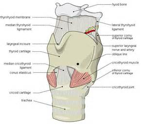 bone loss and thyroid picture 10
